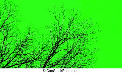 Branches On Green Screen