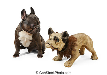 Young French bull dog with old model of his breed - French...