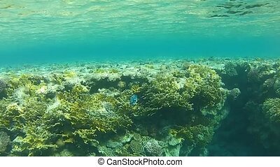 Submarine illusion - Coral reefs and exotic fish, tropical...
