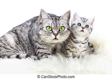 Mother silver tabby cat with young kitten