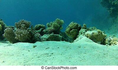 Underwater life on the ocean floor.