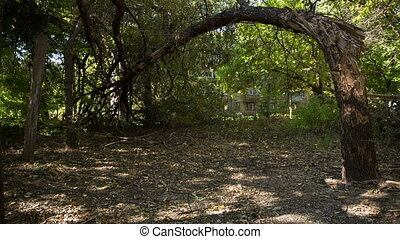 Broken Tree On The Ground - projectile hit the tree on the...