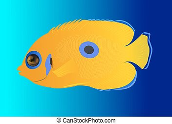 yellow tropical fish on blue baclground
