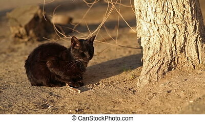 Black Homeless Cat - Black homeless cat sits near tree