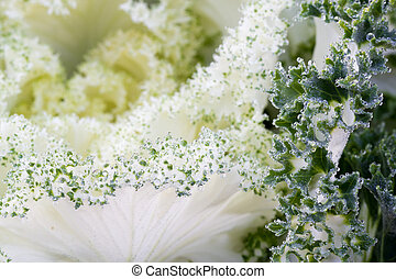 the frost flower in morning - the frost flower of vegetables...