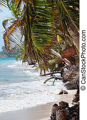 Closeup coconut Palm Tree in the wind on white sand beach...