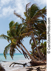 Palm Trees in the wind on caribbean white sand beach coast...