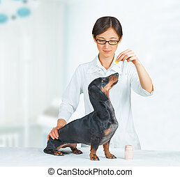 Vet holds medication for dog - Veterinarian woman holds...