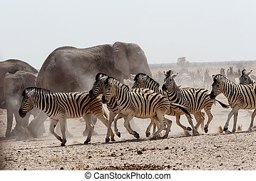 crowded waterhole with Elephants - Crowded waterhole with...