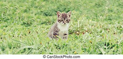 Little kitten on grass