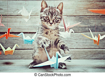 Little kitten - Cute little kitten is playing with colorful...