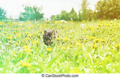Curiosity kitten - Curiosity little kitten is sitting in...