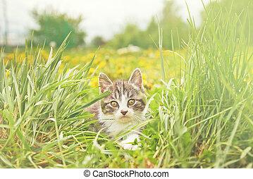 Cute little kitten on green grass