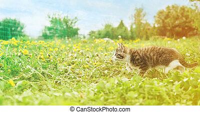 Little kitten runs on grass - Little kitten runs on green...