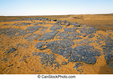 old fossil in  the desert of morocco  rock  stone