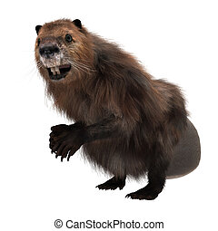 North American Beaver - 3D digital render of a North...