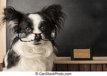 Dog as a school teacher with glasses, blackboard with empty...