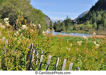 greenery lanscape in mountain - wooden fence in wild flowers...