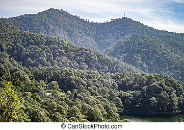 Green forest on moutains having long range