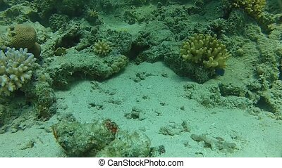 illusion - Beautiful coral, warm sea, exotic fish, diving...