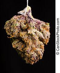 Twisted Purple OG 2 - Medical Marijuana shot in Denver,...