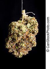 Primus OG - Medical Marijuana shot in Denver, strain is...