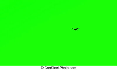 Bird Flying Chroma Key - Lonely Bird Against Green Screen