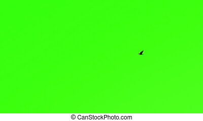 Lonely Bird Chroma Key - Lonely Bird Against Green Screen