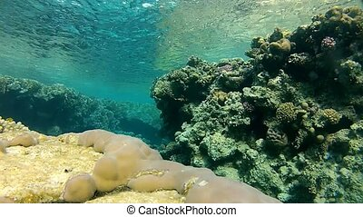 clear water and mysterious - Beautiful coral, warm sea,...