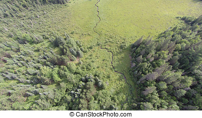 Sedge Meadow Forest - Viewed from the air a forest opens up...