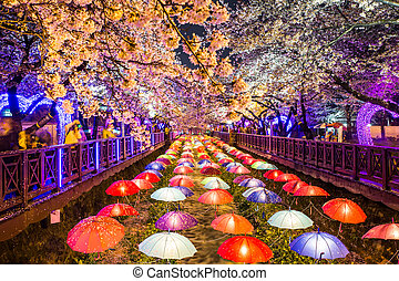 Cherry blossoms at night in Busan, South Korea