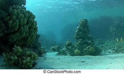 undersea - Beautiful coral, warm sea, exotic fish, diving...