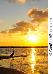 Seabird with sunrise background at Maldives.