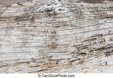 Driftwood Background 2 - Closeup shot of a section of a...