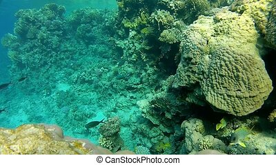clear water - Beautiful coral, warm sea, exotic fish, diving...
