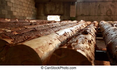 Wood industry. View of raw logs, close-up