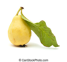 yellow guava fruit - yellow, normally called white, guava...