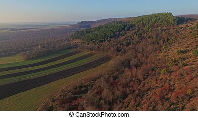 Aerial view of autumn field and forest