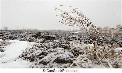 Twig with hoarfrost in winter field, december landscape