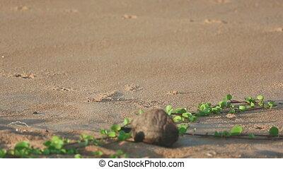 Sand crab on the beach