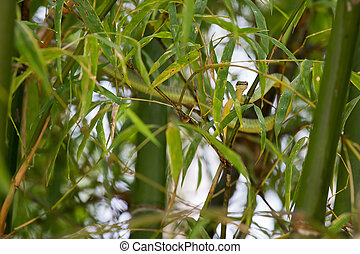 Green snake creeps in bamboo - Green snake creeps in bamboo....