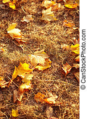 Autumn leaves in the grass