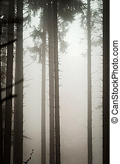 Beautiful pinetrees in the foggy forest, french nature,...