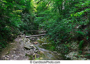 Wooden bridge over mountain creek in the forest