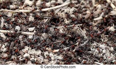 life ants