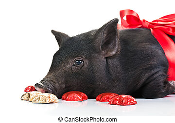 A Pig\'s life - Lazy black piglet with a red ribbon over...