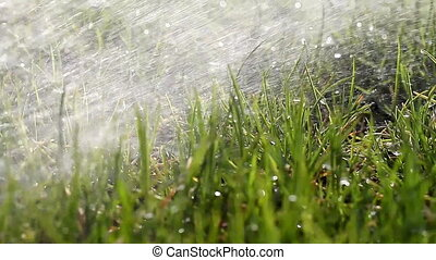 Greasy Grass WATERING BACKGROUND