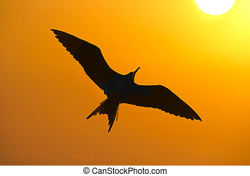 Bird Silhouette is a closeup detailed silhouete of a bird...