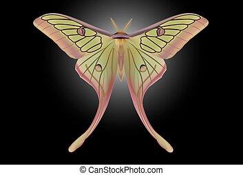 A beautiful Luna Moth