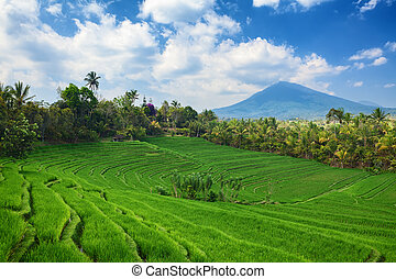 Green rice terraces landscape on mountain background -...